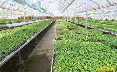 从事绿色有机农业需要注意的几个问题