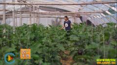 [农广天地]女白领齐利沙的蔬菜种植致富经