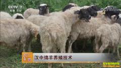 [农广天地]陕西汉中绵羊养殖技术视频