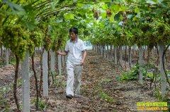 新时代农业需要什么样的新农人?