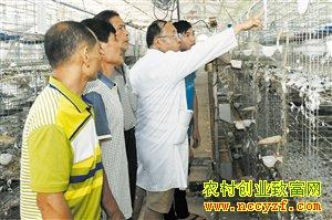 """海南海口三江镇抱团养鸽实现帮扶""""双赢"""""""