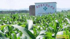 农业综合开发项目补贴多 农民如何得实惠?