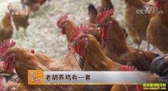 [农广天地]四川大邑县胡军养鸡有一套 年销三千万