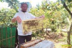 四川泸州73岁老人张安智养蜂有术一年收入5万元