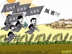 又迎政策利好!给钱、给地、开展培训,国家多部门支持返乡大学生
