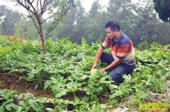 重庆南川区赵长江川木瓜套种西瓜年收入60多万元