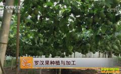 [农广天地]罗汉果种植与加工技术视频