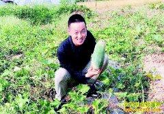 重庆璧山大学生李华回村创业种植水果冬瓜每斤售价10元