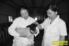 """山东阳谷刘新华中草药养羊效益好 喂出""""高端羊肉"""""""