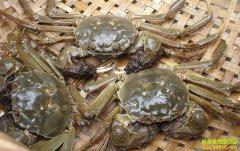 螃蟹多少钱一斤?2018年9月28日最新大闸蟹批发(收购)价格