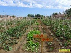 怎样经营家庭农场,家庭农场经营需注意哪些细节?