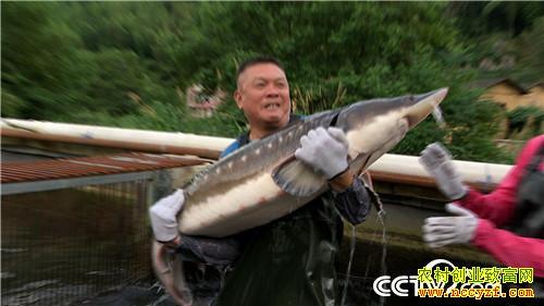[致富经]福建福清吴良美北京创业养鲟鱼 一句话让他巧卖千万