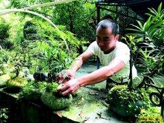 四川成都卢兵:鹅卵石做盆景 有创意就有钱赚