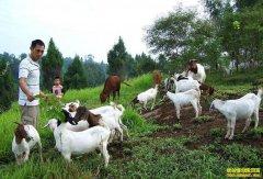 秋冬季节山羊五种常见病的症状及防治方法