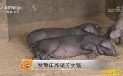 [农广天地]发酵床养殖苏太猪技术视频