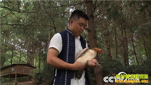 """[致富经]贵州长顺县""""鸡蛋哥""""班宋智养鸡卖绿壳蛋年销千万元"""