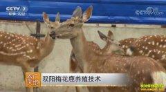 [农广天地]吉林长春刘伍权养殖双阳梅花鹿的致富秘籍