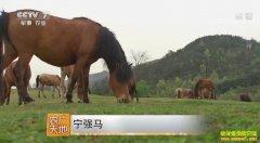[农广天地]陕西宁强马养殖技术视频