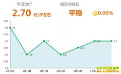 2018年9月21日山东昌邑、安丘最新生姜价格行情