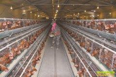 这样开养鸡场不仅省电费还能额外挣钱 鸡粪处理案例推荐