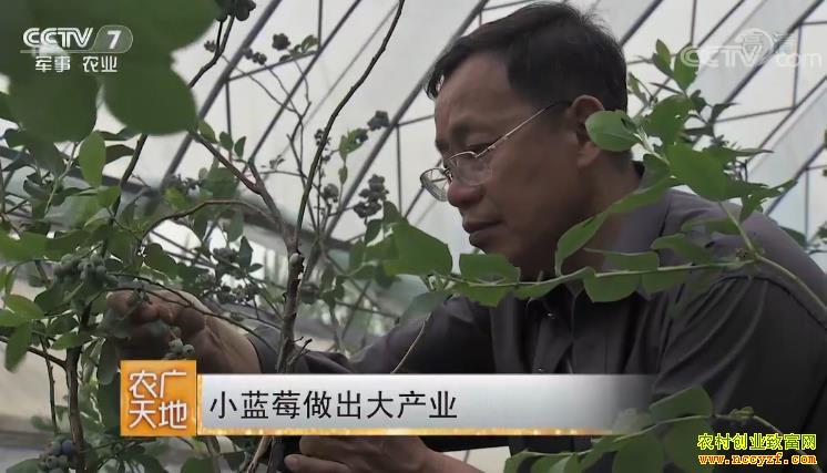 [农广天地]小蓝莓做出大产业 20180919