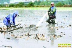 四川泸州王仕川种植莲藕高压水枪采挖省时省力效益高