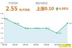 2018年10月1日山东昌邑、安丘最新大姜价格行情