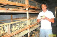 四川泸州明洪生瞄准空白养种鸭孵鸭苗好赚钱