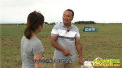 [致富经]上门女婿宫丽萍巧卖羊 一只价值7000元