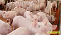 猪肉消费进入旺季!专家预测短期内全国猪价将全面攀升!