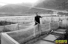 重庆南川熊世财养殖禾田蛙 生态养蛙效益高