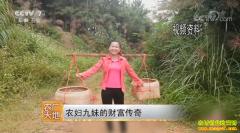 [农广天地]广西灵山县农妇九妹甘有琴的财富传奇