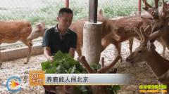 [农广天地]黑龙江养鹿能人赵广华闯北京养鹿
