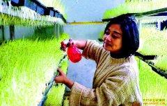 四川泸州刘玲返乡创业种植豌豆芽年入6万元