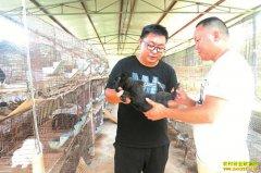 四川泸州陈强养肉兔 种猕猴桃 种养循环年收入50万元