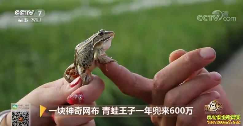 [致富经]一块神奇网布 江苏沭阳冯强养青蛙一年兜来600万