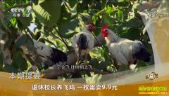 [致富经]天津蓟州胡金艳养殖鹊山鸡 一枚鸡蛋卖9.9元
