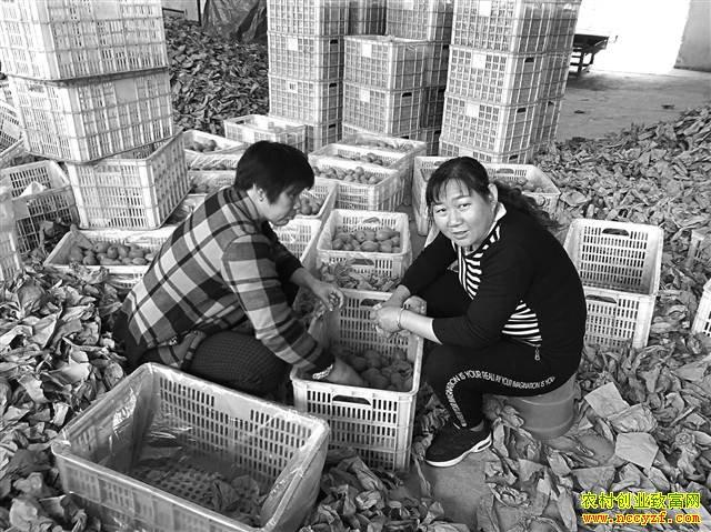 重庆奉节:猕猴桃网上卖 售价涨几倍