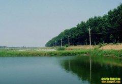 山东茌平县张棚养鱼效益高 三亩鱼塘,年入六万