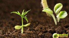 什么是中医农业?中医农业的未来前景怎样?