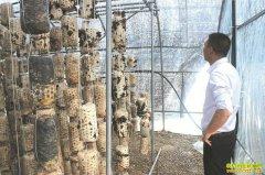 四川泸县:秸秆发酵变菌包 种植菌菇效益高