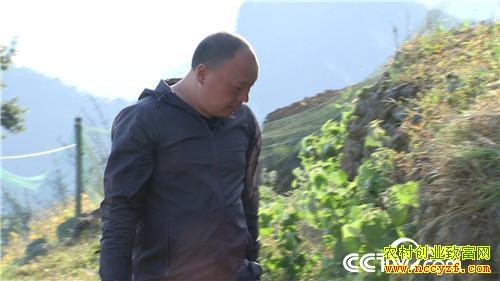 [致富经]赶鸡上树 湖北宜昌张杰养鸡把赔钱的生意做成年入800万