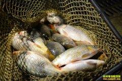 专家预测未来淡水鱼价格会小幅波动