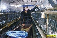 重庆綦江程本超:家庭农场养兔收入上千万元