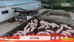 """[科技苑]河北衡水刘瑞强""""绿招""""养出健康猪"""