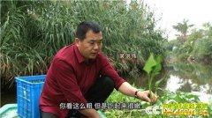 [致富经]江苏海安县吴洪伟水上种植空心菜 水面上漂来财富