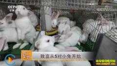 [农广天地]河北涿鹿县赵玉星致富从养殖五对小兔开始