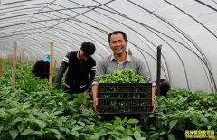 家庭农场如何定位,什么样的家庭农场模式适合农民经营?