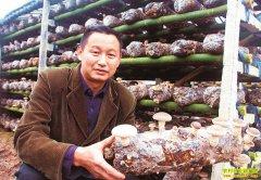 四川泸州周光旭找准市场空白种植花菇赚大钱