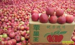 陕西凤翔县大学生魏乾搭平台网上卖苹果